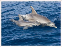 Dolphin watching at sea